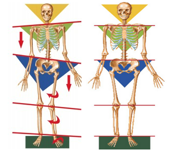 Pronation Diagram